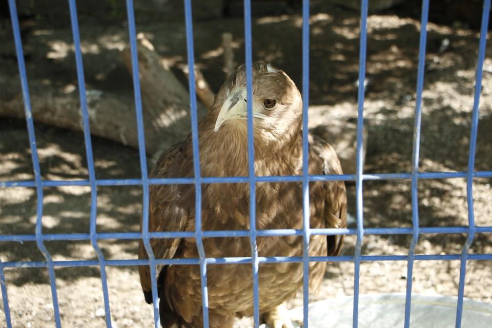 Практически все птицы в центре не могут вернуться в природу из-за полученных травм Фото: автора