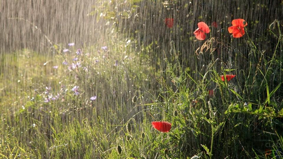 Хоть и обещают, что будет дождь, сейчас все равно лето.