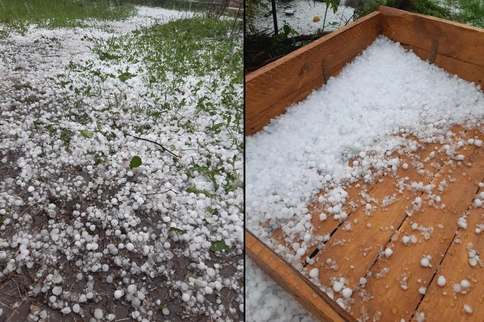 Град уничтожил плодовую культуру дачников в Ленобласти. Фото: vk.com/club13781002