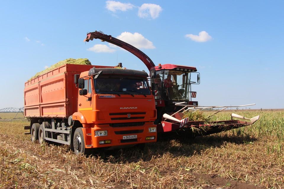 В этом году Крым планирует собрать 1,3 миллиона тонн зерновых