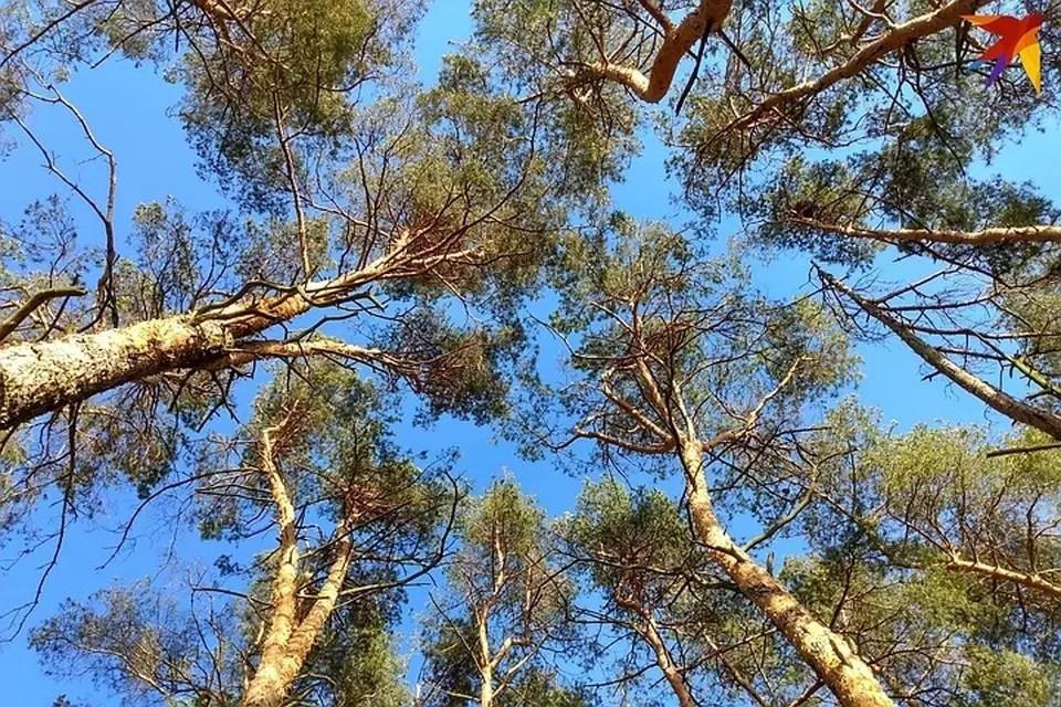 Запреты и ограничения на посещение лесов введены в 22 районах Беларуси