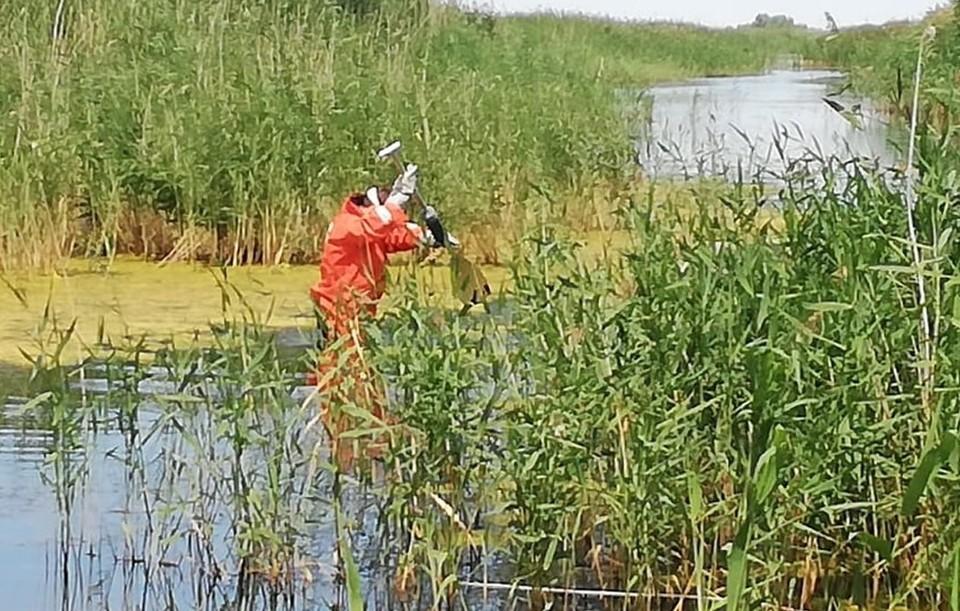 Карьер сильно зарос ряской и камышом. Фото: поисково-спасательная служба Челябинской области