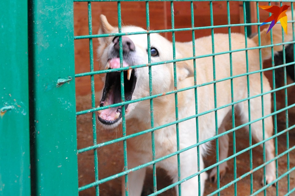 8-летнюю девочку из Мурманска собаки покусали более 100 раз.
