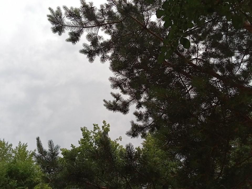 Погода на Ямале на 12 июля