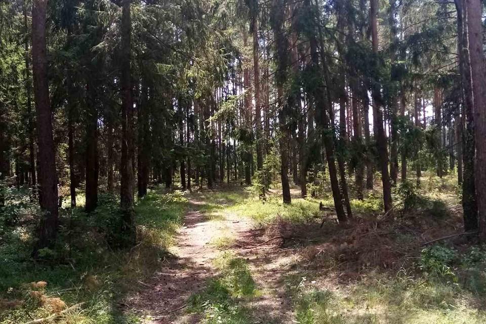 Трехлетняя девочка ушла из дома и зашла в лес на километр, пока ее не нашел сотрудник МЧС. Фото: МЧС.
