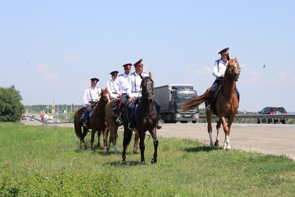 В этом году казаки начали мониторить местность с 9 июля. Фото: сайт правительства РО