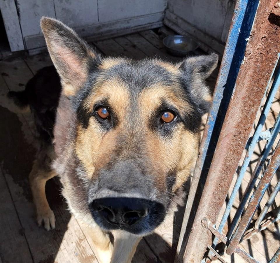 Смоленская колония ищет новый дом для служебной собаки пенсионера. Фото: УФСИН России по Смоленской области.