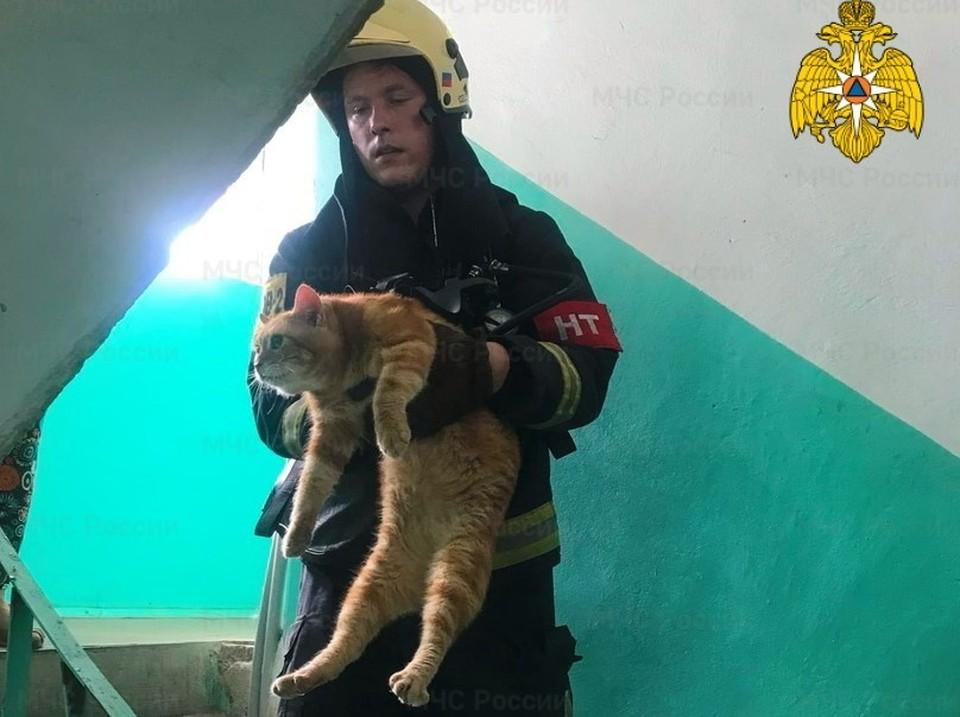 Пожарные спасли более 10 кошек из горящей квартиры в Смоленске. Фото: ГУ МЧС России по Смоленской области.