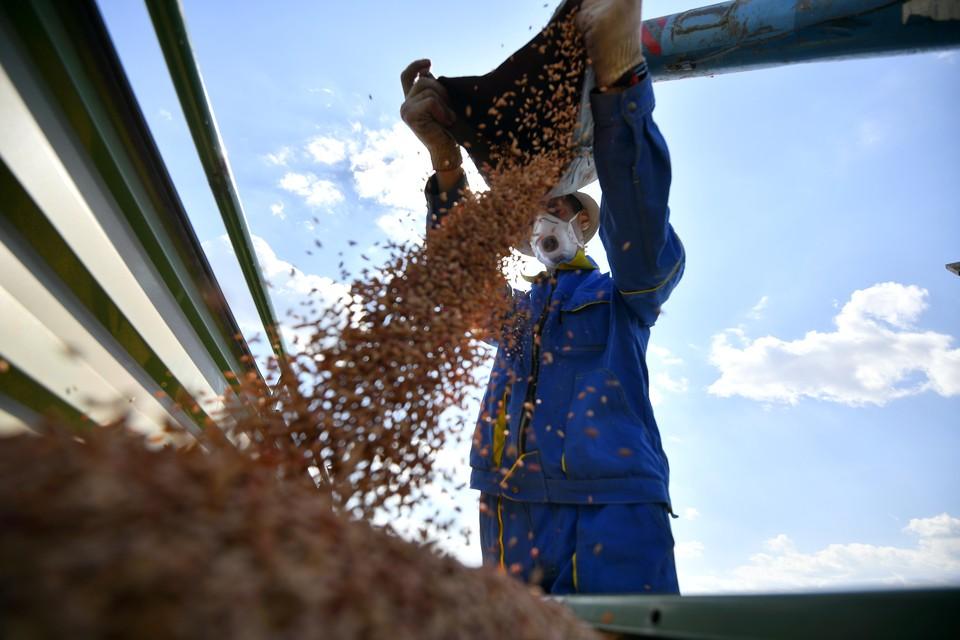 Сегодня работники сельского хозяйства - это высокообразованные люди, от которых напрямую зависит продуктовая безопасность губернии и всей страны.