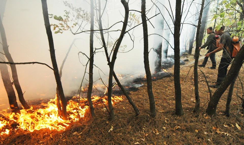 Лесные пожары могут угрожать Саратовской области из-за экстремальных погодных условий