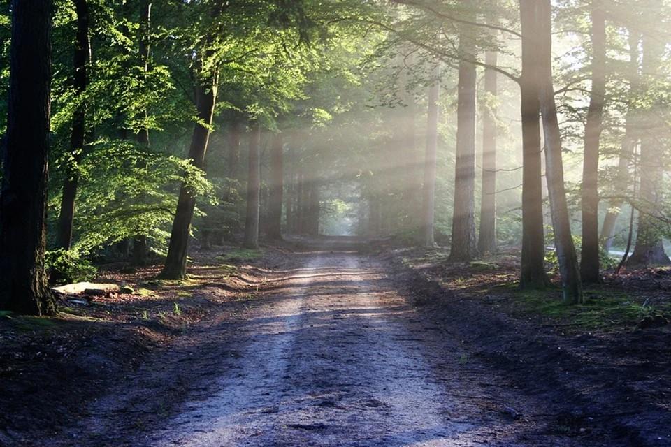 Не стоит паниковать, если заблудились в лесу. Фото: pixabay