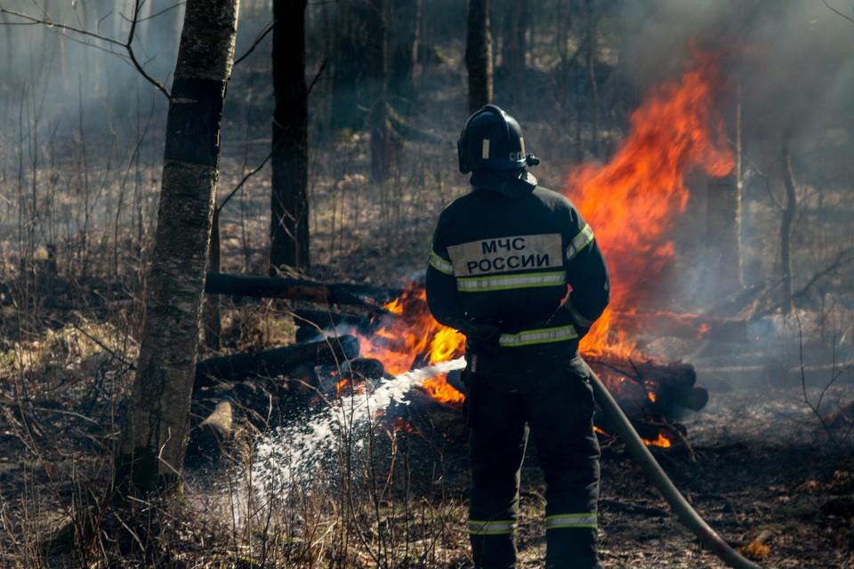 Ситуация с лесными пожарами в Ленобласти под контролем - хотя власти на всякий случай прорабатывают все сценарии развития ситуации. Фото: МЧС России