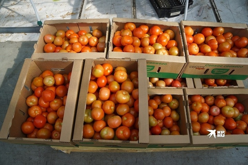 Овощи дорожают каждый месяц