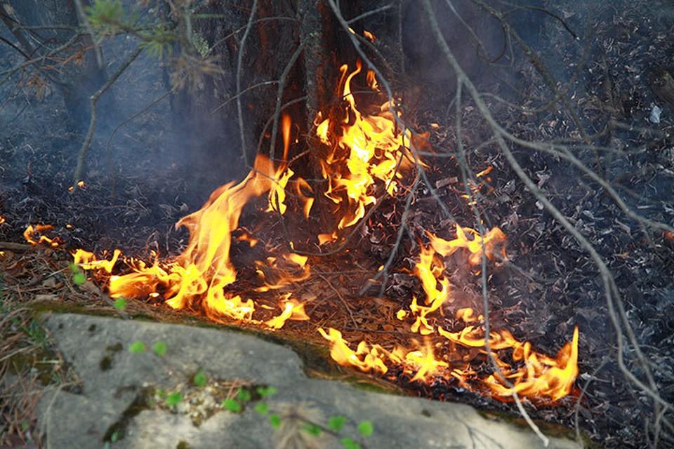 Более 31 тысячи гектаров леса горит в Иркутской области 19 июля