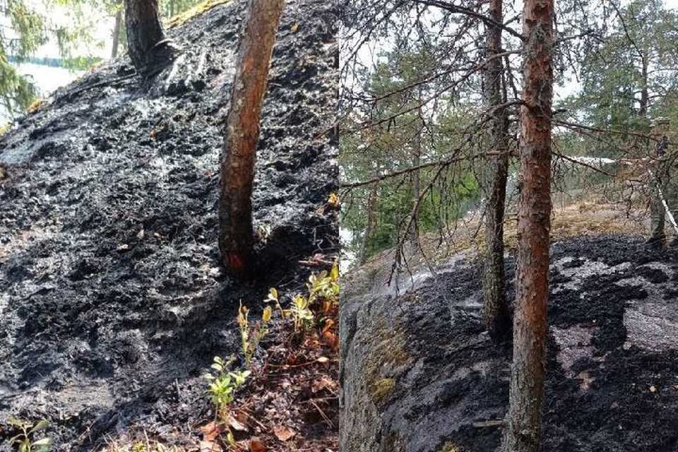 Пожар произошел в лесной части парка Монрепо / Фото: Парк-заповедник Монрепо