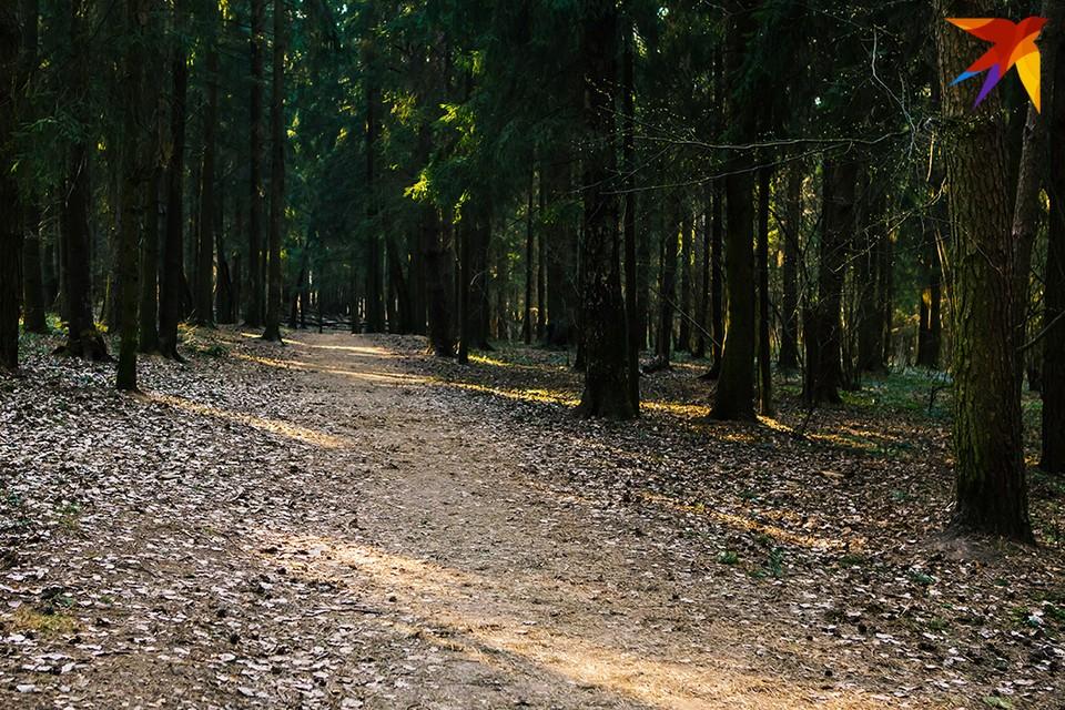 Чтобы не заблудится в лесу, следует соблюдать элементарные принципы безопасности. Фото: Юлия Хвощ