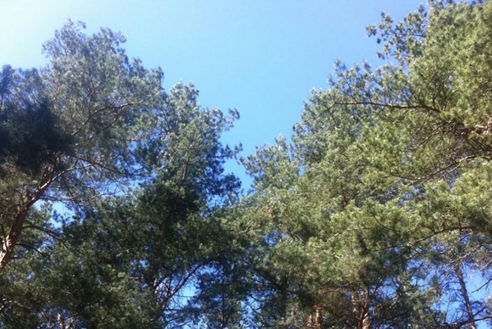 Леса Тверской области ежедневно патрулируют мобильные группы