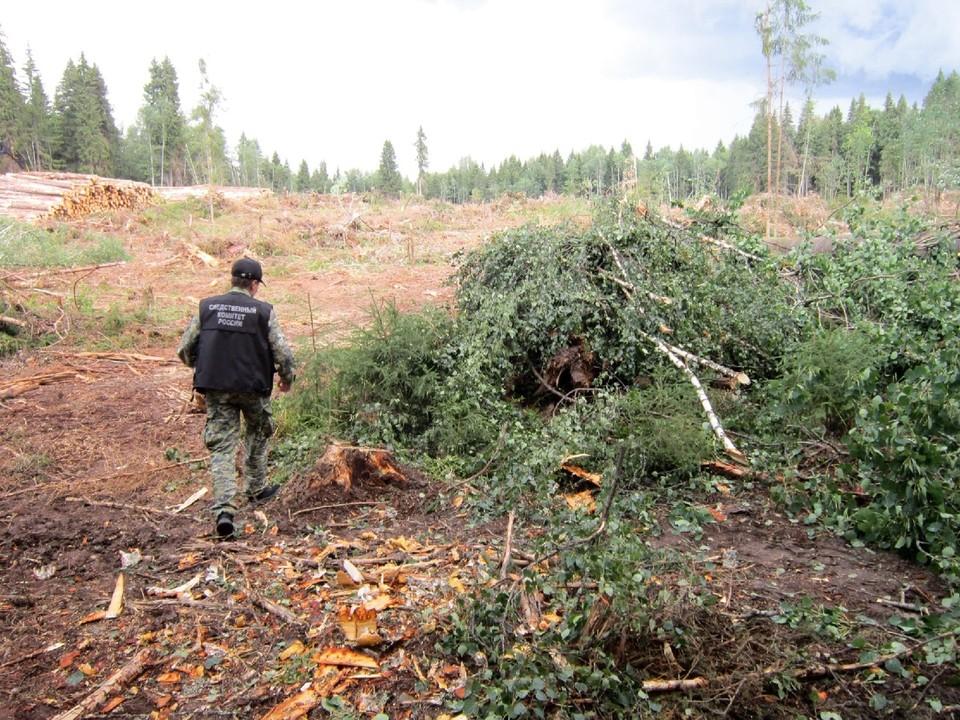 На делянке мужчину убило деревом Фото: СУ СК РФ по Тверской области