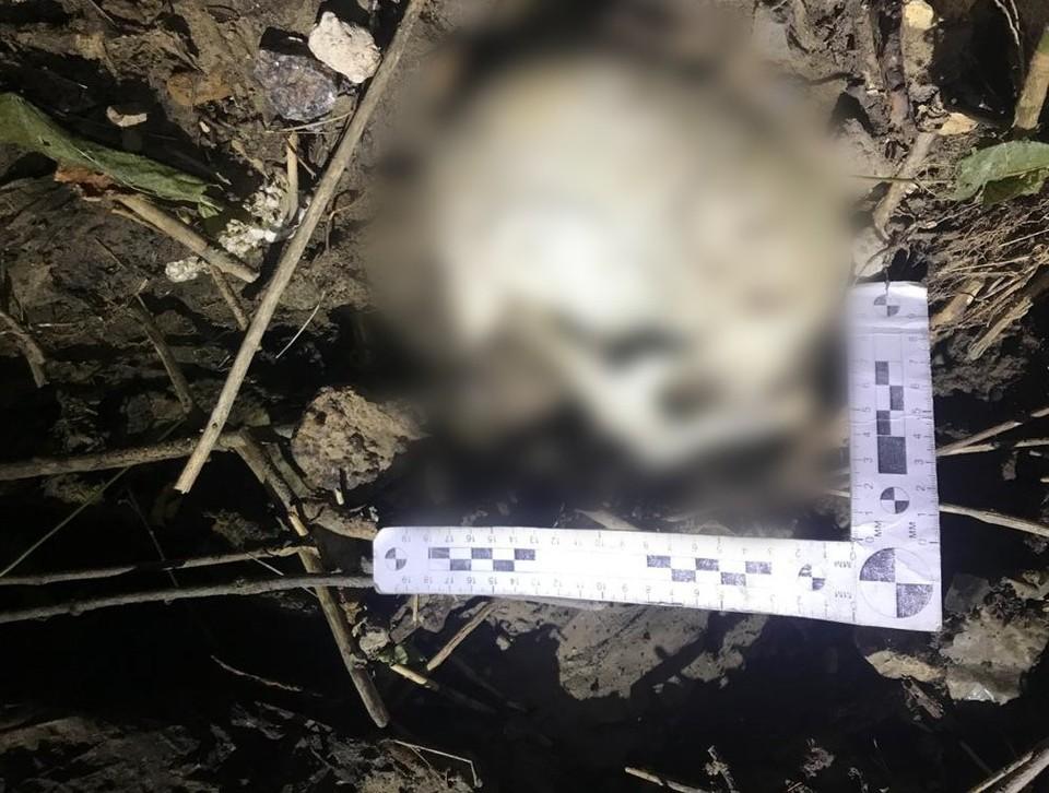 Череп. найденный под мостом в Саратове