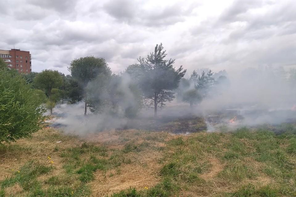 Трава горит в Полежаевском парке. Фото: vk.com/spb_today / Дмитрий Сурков