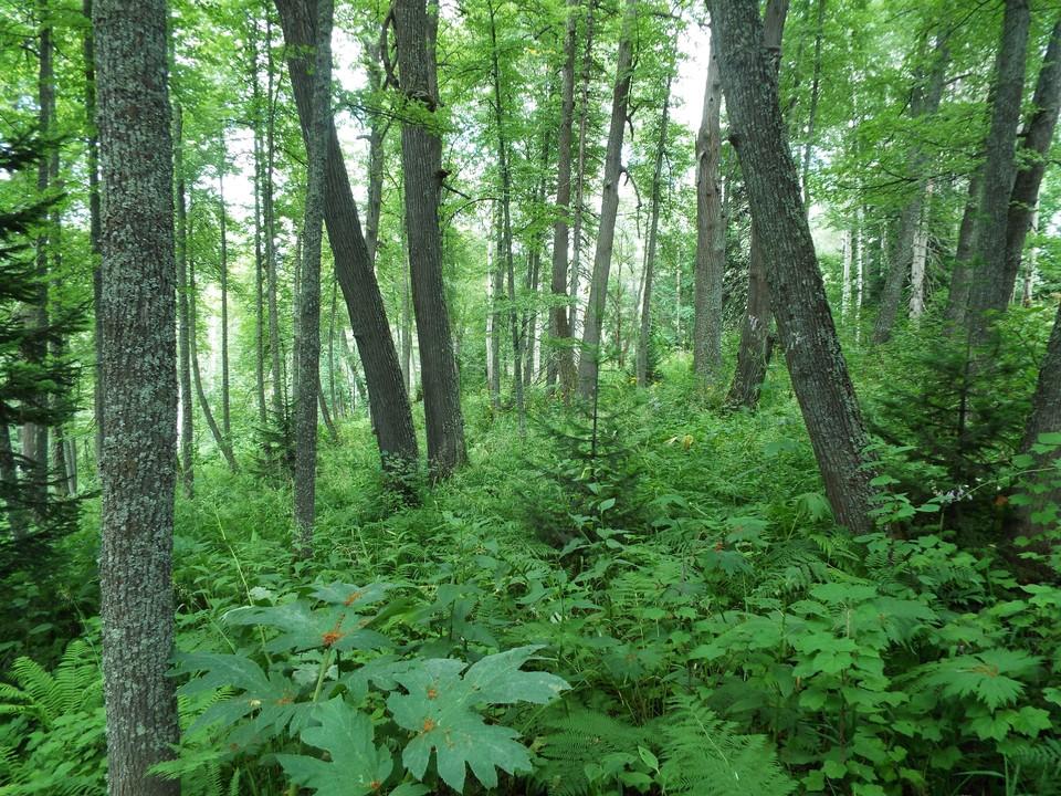 Фото: Комитет охраны окружающей среды Кузбасса
