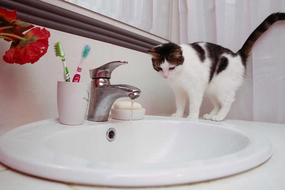 В Гомеле и области жалуются на коричневую воду.