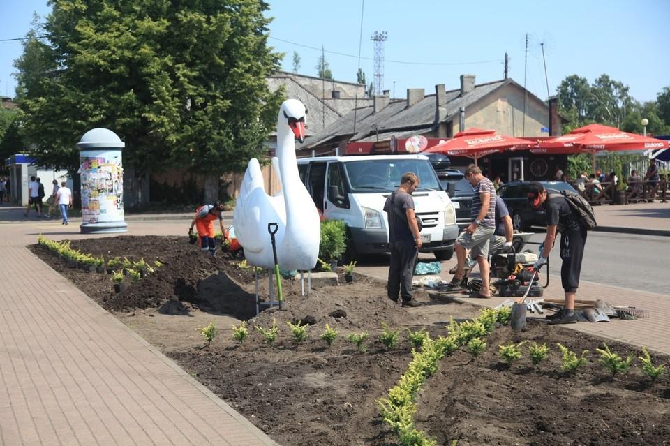 Белоснежный лебедь установлен в Балтийске около вокзала.