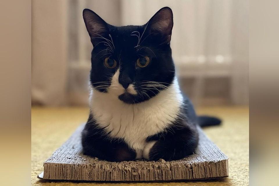 Неловкий котик из Петербурга, лишенный мозжечка, стал звездой Интернета. Фото: instagram.com/cat_barion