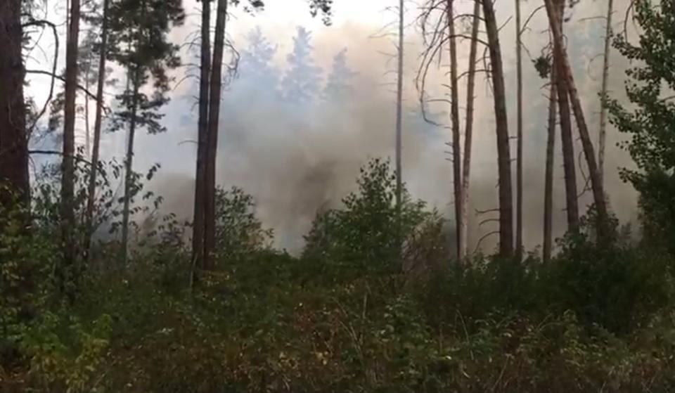 В Тольятти опять полыхает лес