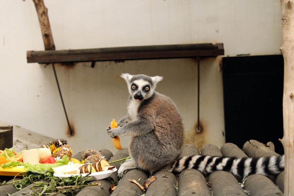 Фото: пресс-служба МАУ «Пензенский зоопарк»