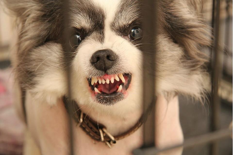 В Тверской области бешенство выявили у собаки