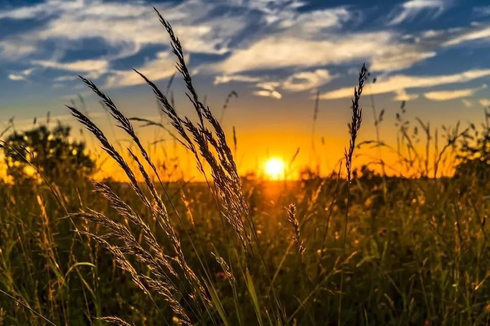 Голышмановские аграрии недовольны низкой урожайностью зерновых культур