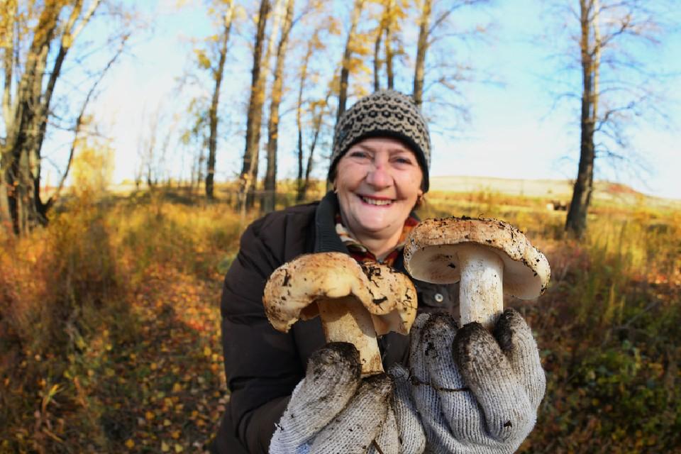 Чтобы сберечь грибницу грибы нужно выкручивать из земли