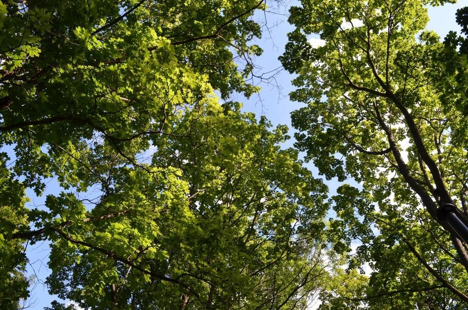 Женщина заблудилась в лесу Шаблыкинского района