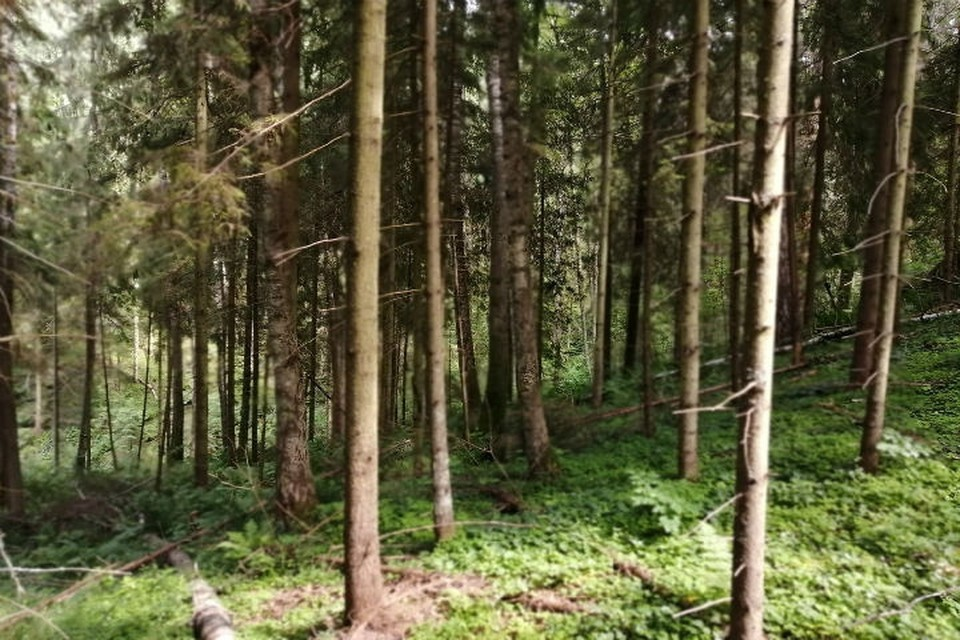 В лесу Ярославской области нашли скелетированные останки отшельника