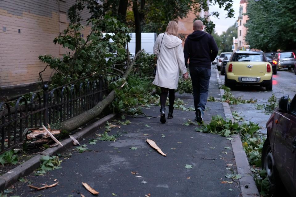 Сильный ветер и грозы ждут Ленобласть 13 сентября