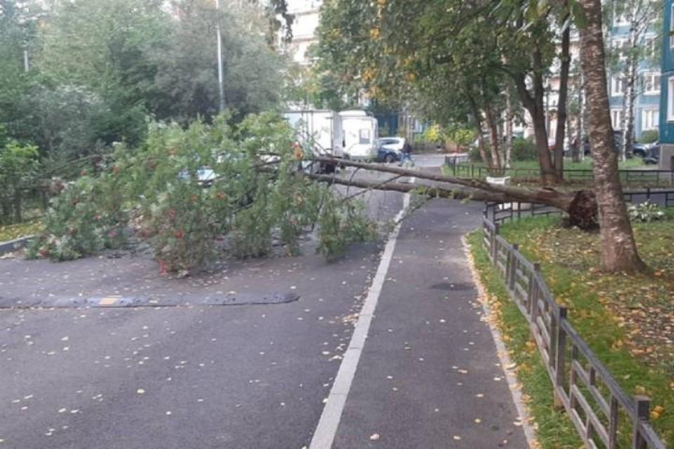 Мощный ветер повалил деревья и дорожные знаки в Петербурге