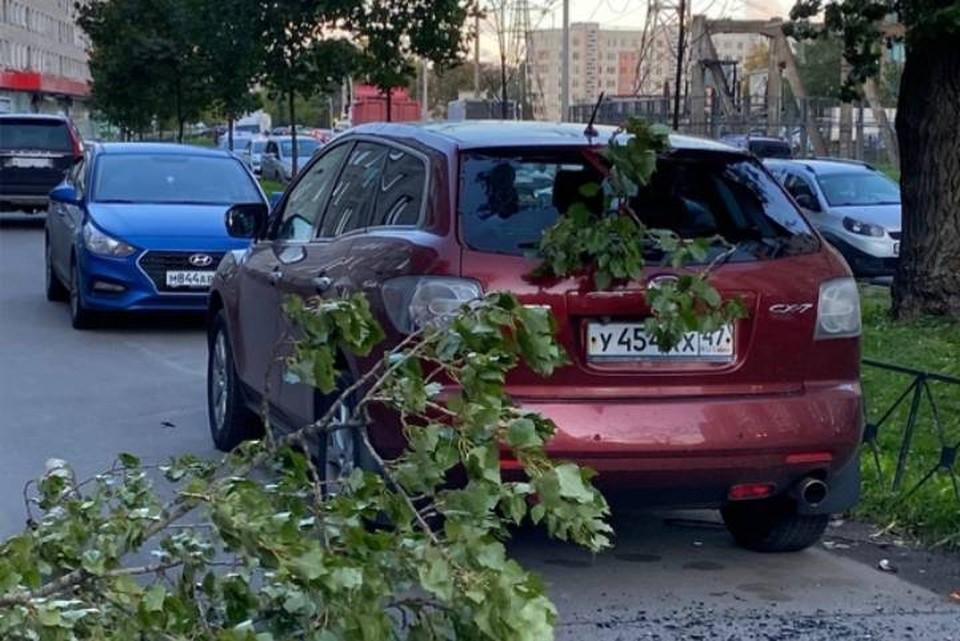 Более 5 деревьев повалил ветер в Петербурге 14 сентября
