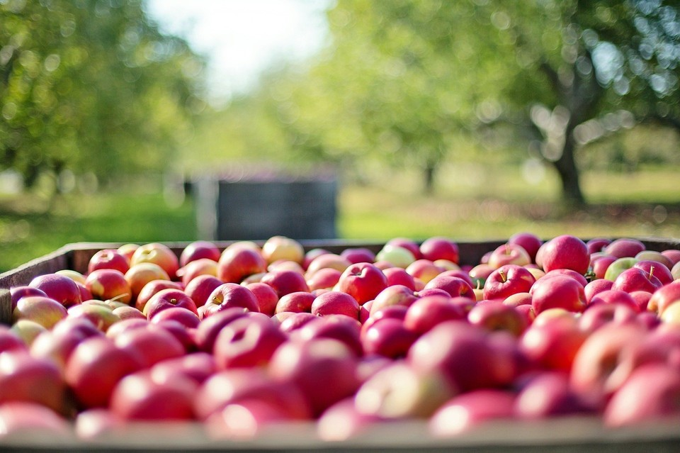 125 кг яблок раздавили в Ижевске. Фото: Pixabay