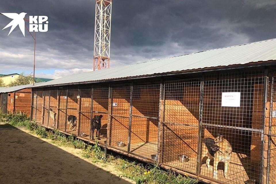 Центр помощи бездомным животным «Переправа» в Сургуте