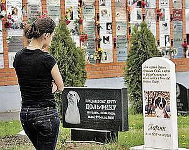 стяжки где в москве похоронить кошку новые вакансии: