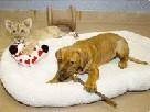 Лев и собачка дружба на век