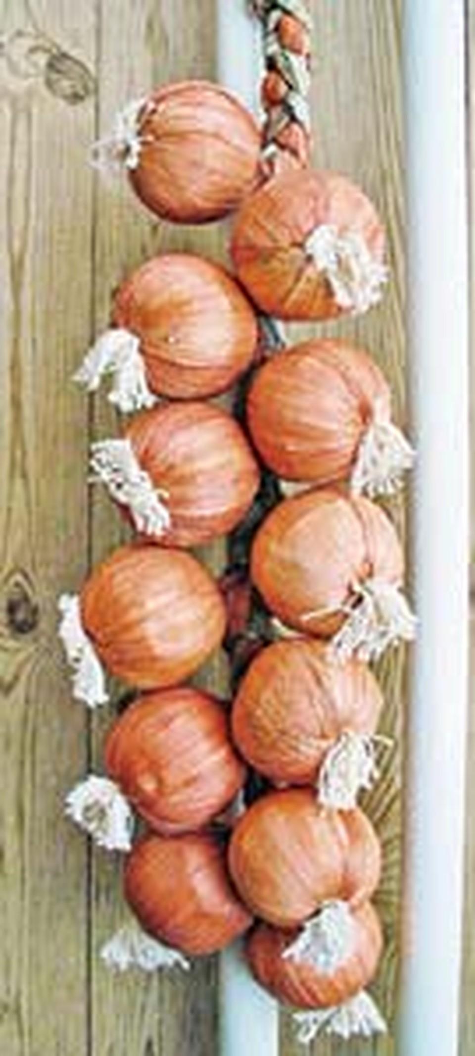 Самый простой способ - хранить лук в связках.