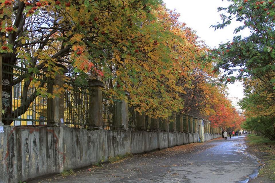 Красивых и благоустроенных парков в Мурманске должно стать больше