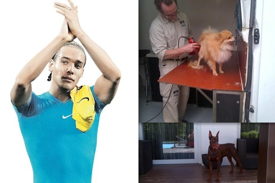 Витсель аксель собаки порода
