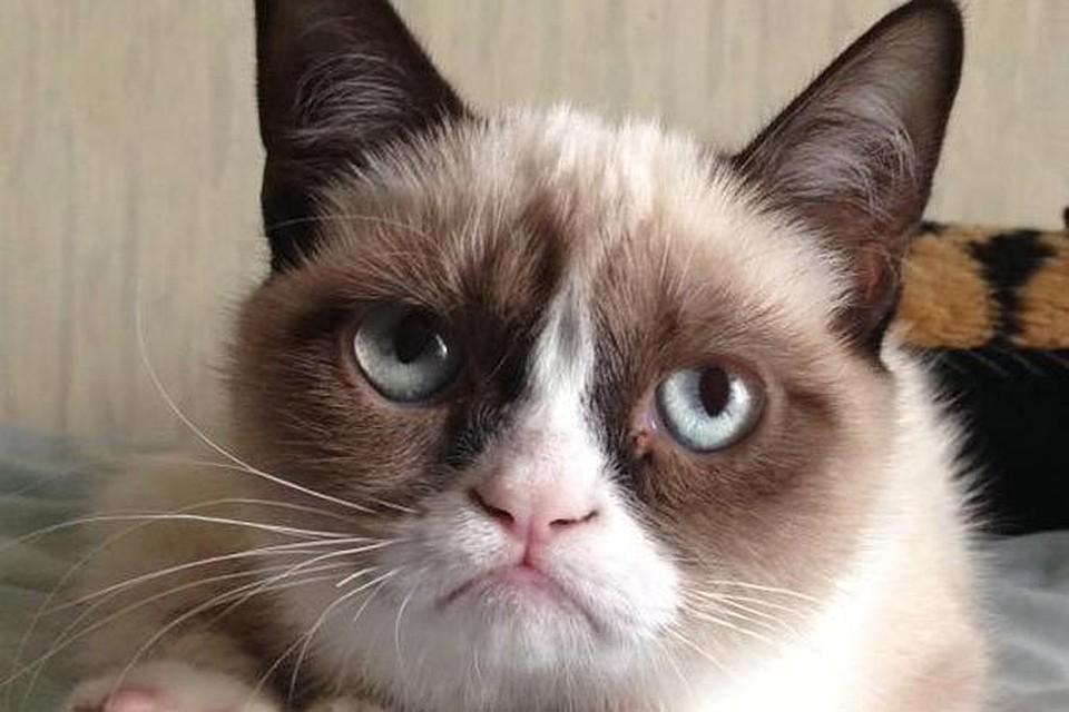 Известные коты в интернете