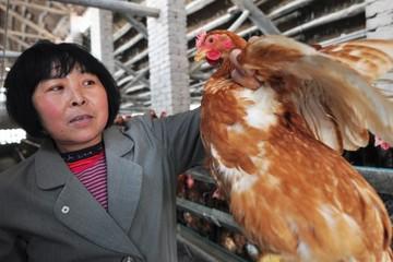 Новый смертельный штамм птичьего гриппа появился в Китае