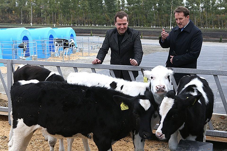 """""""Молочное животноводство самая сложная отрасль в сельском хозяйстве"""" - заявил премьер-министр Медведев."""