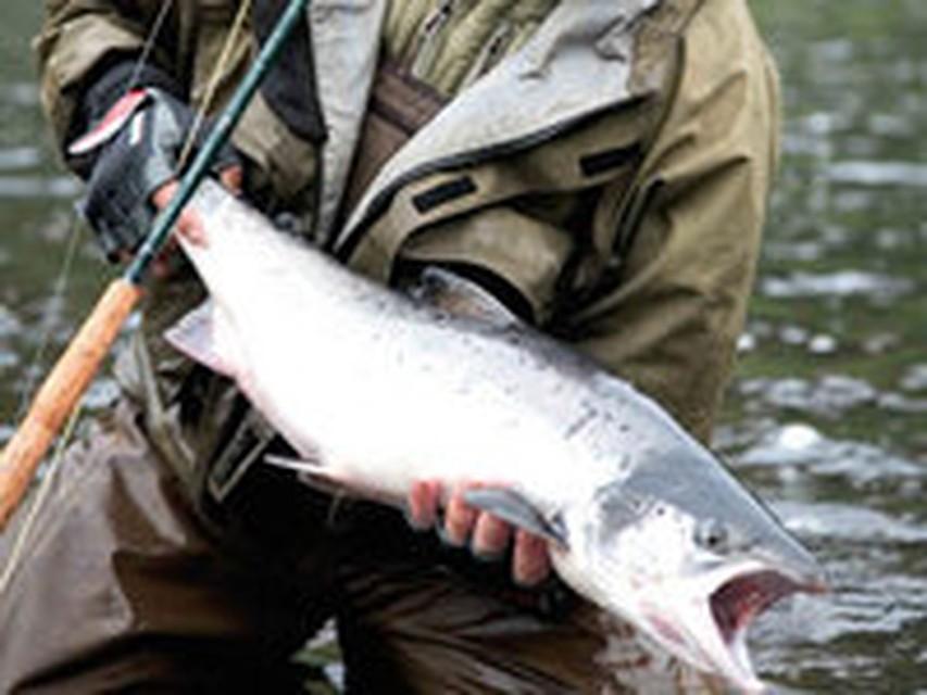рыбалка на что ловят семгу