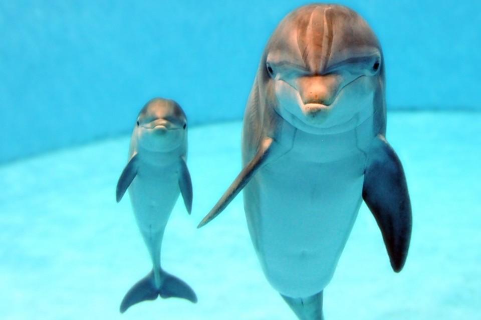 Крымские боевые дельфины теперь будут служить ВМФ России